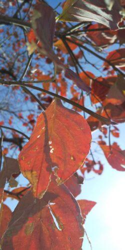 小さい秋見つけた🍂